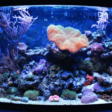 """Fish-Tank Appeal"""